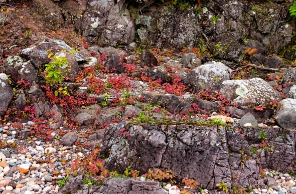 micro landscape – colorful moss, leaves, rocks