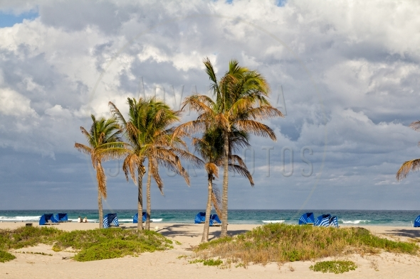 Palm trees on the beach in Florida