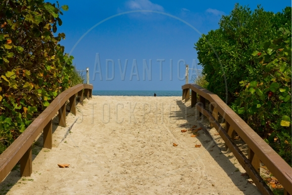 Walkway to the beach, lined by lush trees