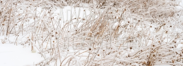 Meadow with Icy Plants