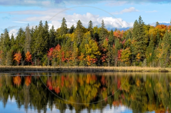 Algonquin Park In Fall – colorful trees