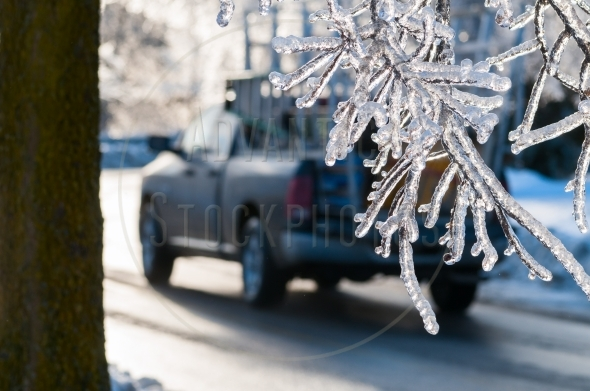 Frozen branches hanging over a road